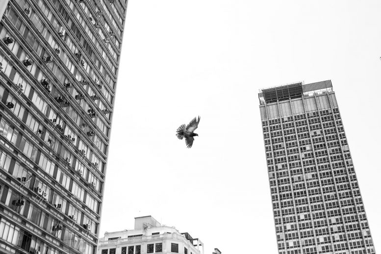 Bird Downtown