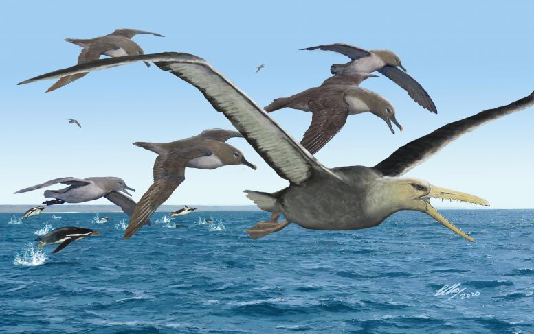 Birdlife in Antarctica 50 Million Years Ago