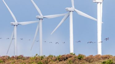 Wind Turbines Harm Birds – These Design and Placement Rules Could Minimize