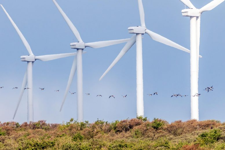 Birds Flying by Wind Turbines