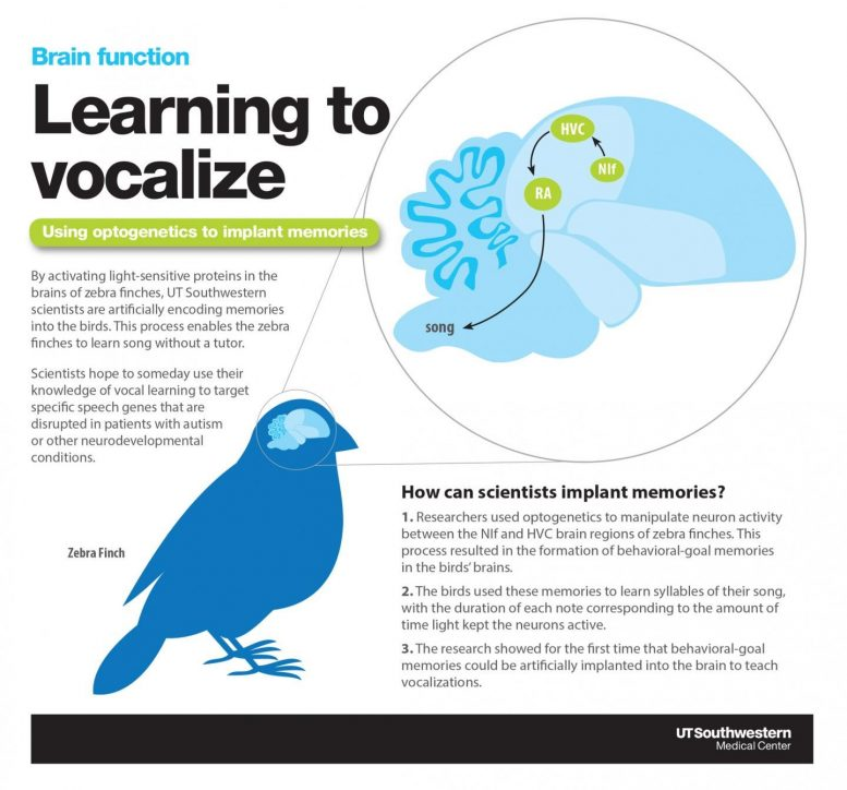 Birds Learning To Vocalize