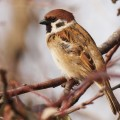 Birdsong Could Help Solve Stuttering
