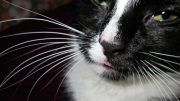 Black and White Cat Whiskers