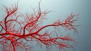 Blood Vessels Model