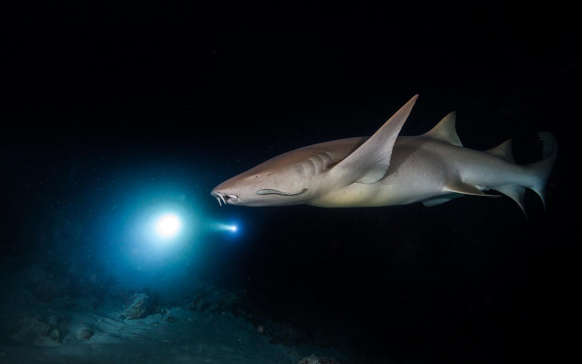 """Sharks Use Earth's Magnetic Fields to Guide Them Like a Map – """"It Really Is Mind Blowing"""" - SciTechDaily"""