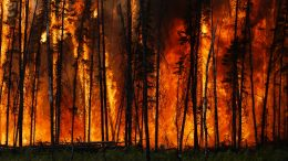 Boreal Forest Fire in Canada