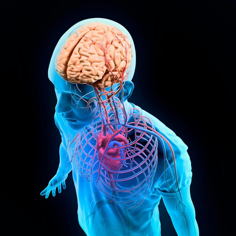 Brain Body Nervous System