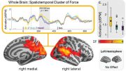 Brain Distinguishes Fact From Possibility