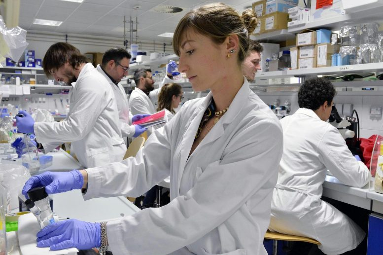 Brain Research Team at University of Trento