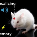 Brain Uses the Cortex for Making Sensory Associations Not the Hippocampus