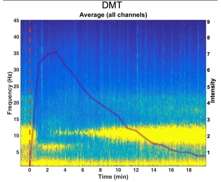 Brainwaves Measured by EEG During DMT