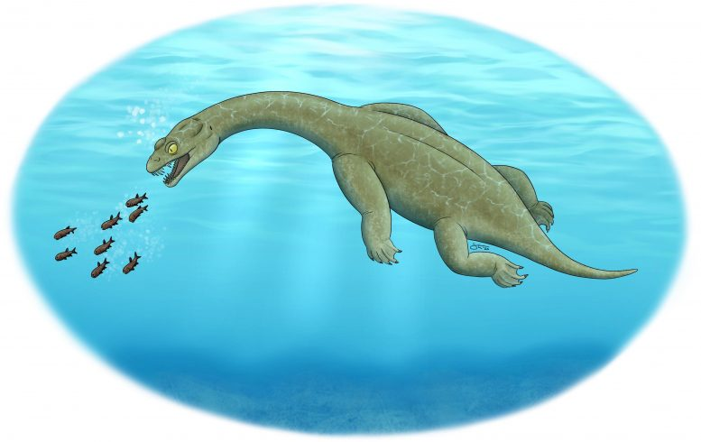Brevicaudosaurus Illustration