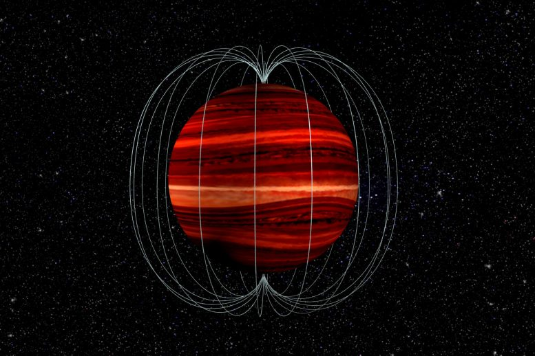 Brown Dwarf Magnetic Field