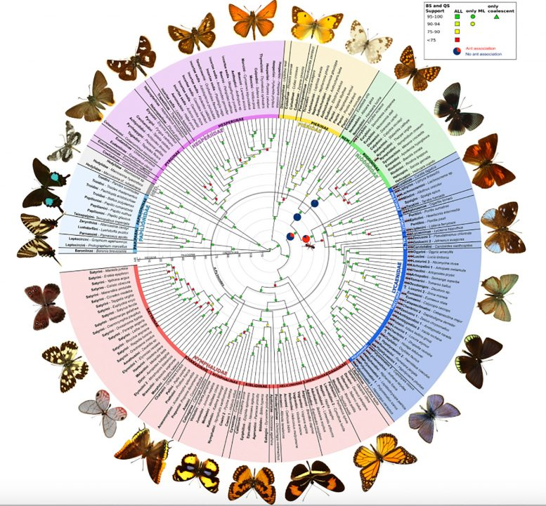 Butterflies Get a Better Evolutionary Tree