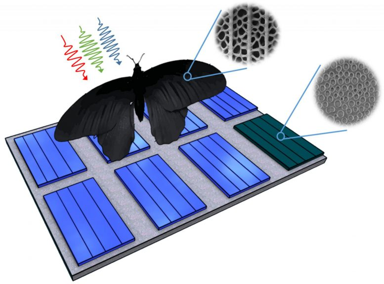 Butterfly Wing Inspires Photovoltaics Enhance Light Absorption Can by Up to 200 Percent