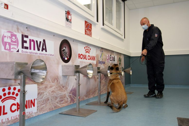 COVID Detection Dog Sniffing Test