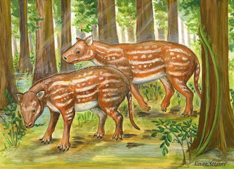 Cambaytherium Reconstruction