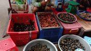 Cambodia Wildlife Market
