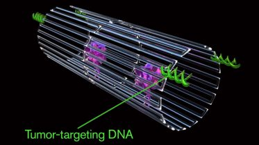 Cancer-Fighting Nanorobots Seek and Destroy Tumors