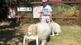 Canine Scent Detection Training