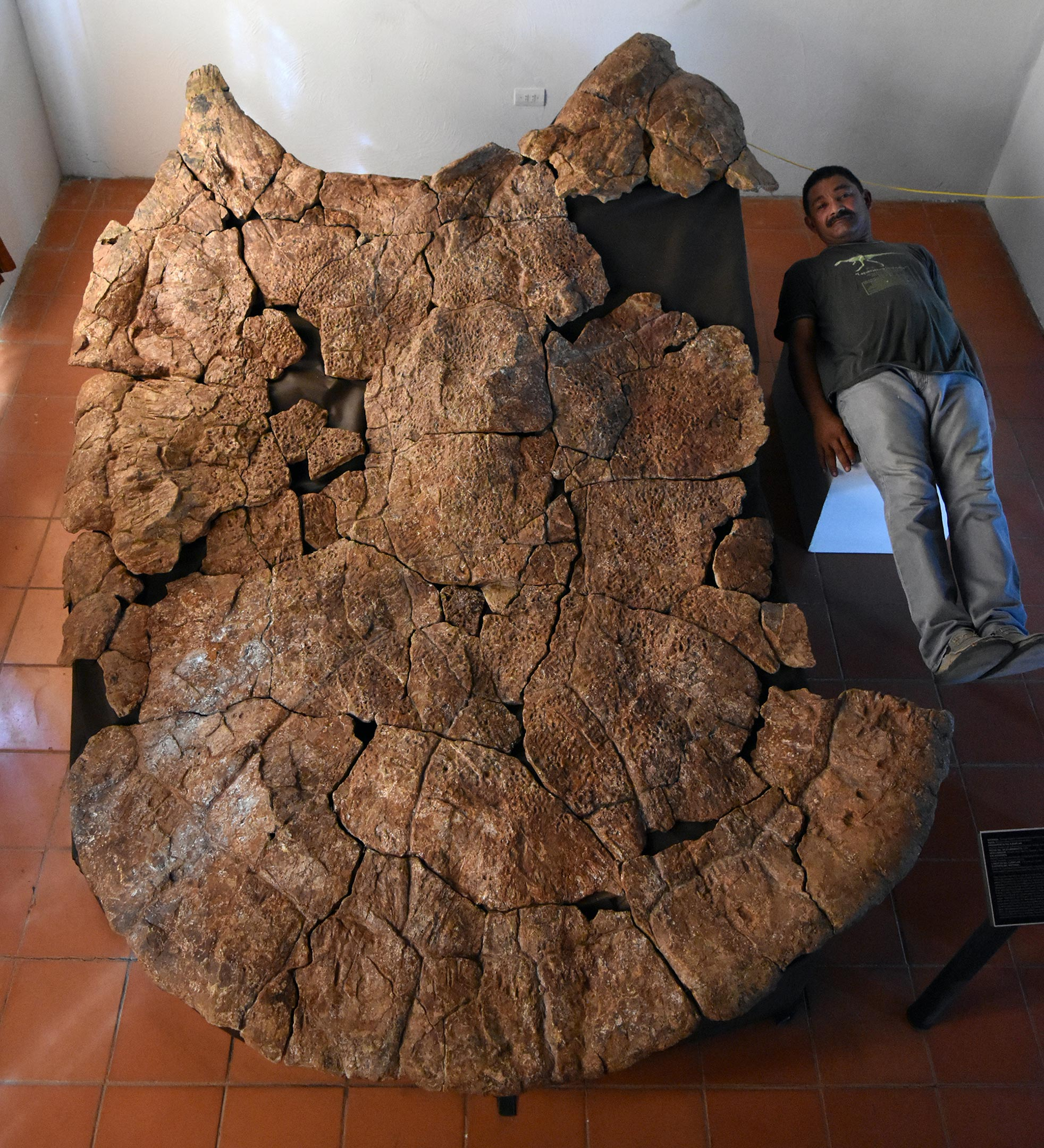 Scientists find car-sized turtle fossil