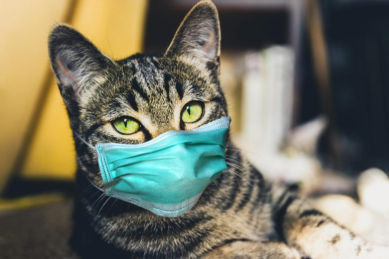 Cat Wearing COVID-19 Mask