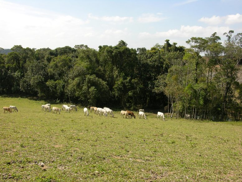 Cattle Ranching Edge of Tropical Forest Remnants