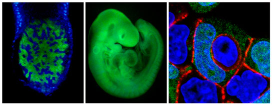 Cells in the Early Embryo Battle Each Other to Death