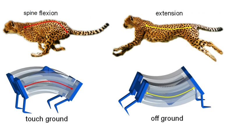 Cheetahs Inspire Faster Soft Robots