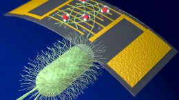 Chemical Sensor Using Organic Nanowires