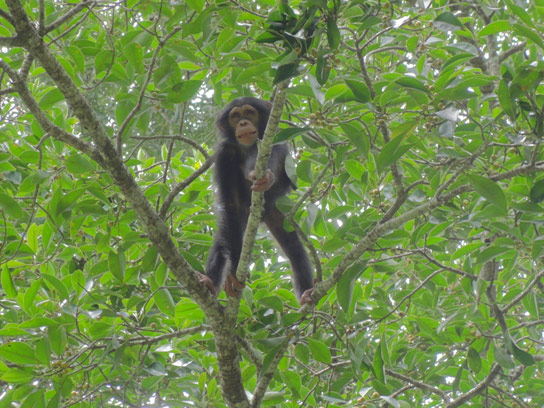 Chimpanzees Plan Their Breakfast Time and Location