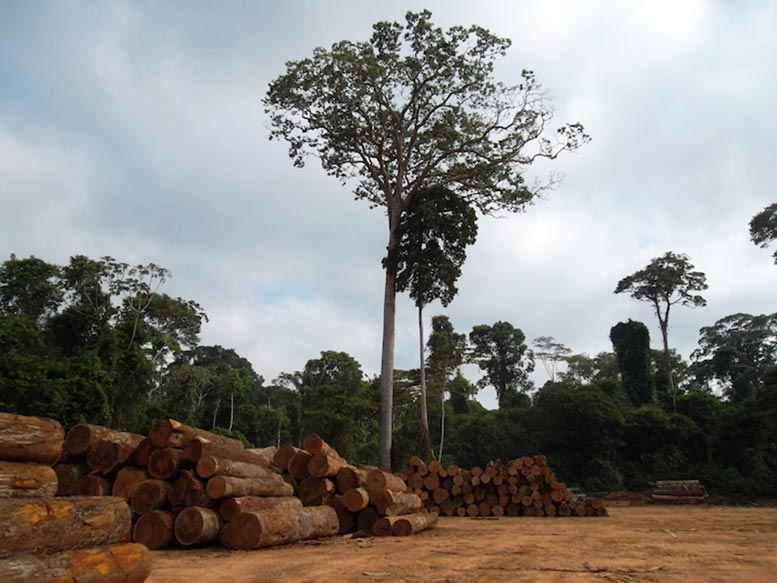 Clear Cutting the Rainforest in Ji Parana Rondonia