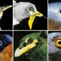 Climate Change Will Affect the Functions Performed by Birds
