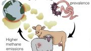 Climate, Infectious Diseases, Methane Emissions Feedback Loop
