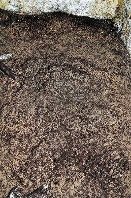 Close Up Mound Bunker Ants