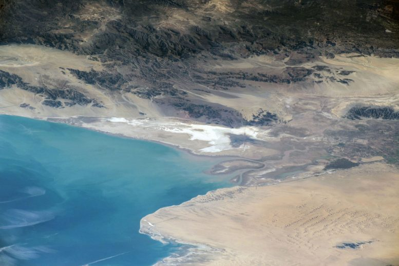 Colorado River Delta Fish Risk Extinction Through Interbreeding