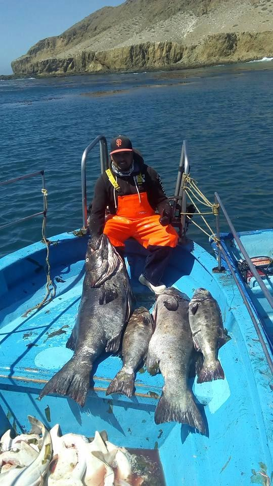 Commercial Fishers Giant Sea Bass