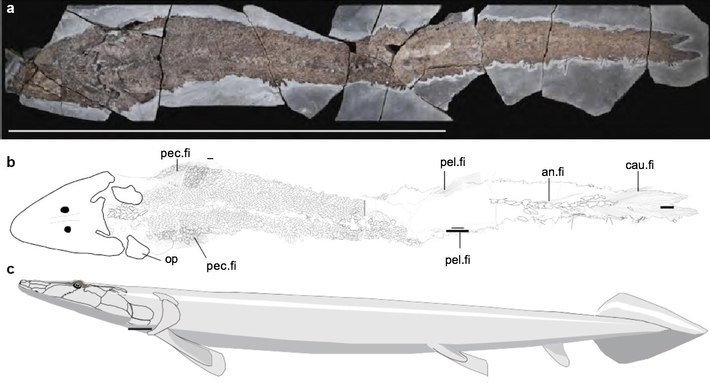 FISH FINGERS: Human hand origins, land animals found in ancient fish fossil