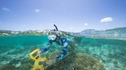 Conducting a Benthic Survey at Heron Island Great Barrier Reef