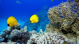 Coral Reef Tropical Fish