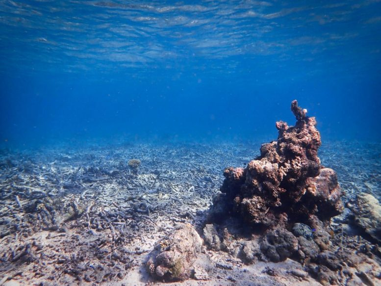 Coral Rubblefield in Sulawesi, Indonesia