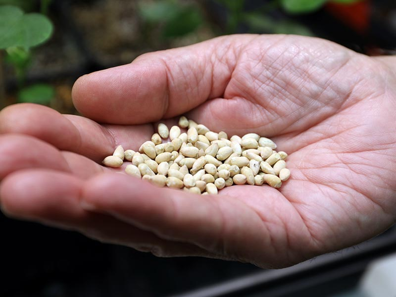 Breeding Better Seeds: Sustainable, More Nutritious Food Production Under the Specter of Global Warming