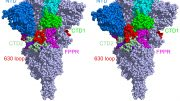 Cryo-EM Structures of the Original and Mutated SARS-CoV-2 Spike Protein