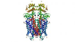 Crystal structure of the mu-opioid receptor bound to a morphinan antagonist.