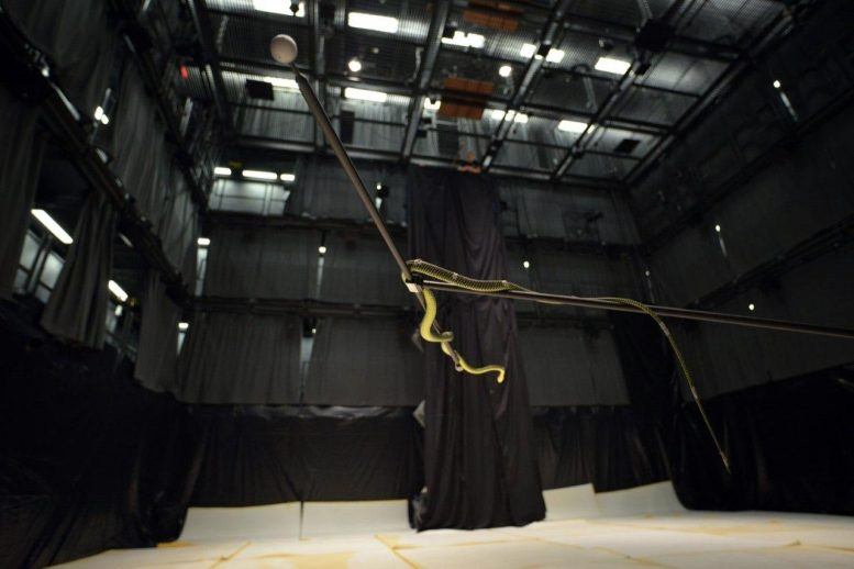Cube Motion Capture Flying Snake