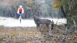 Cyclist Wildlife
