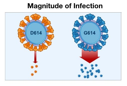 D614G COVID Infection