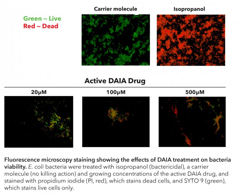DAIA Treatment Fluorescence Microscopy Staining