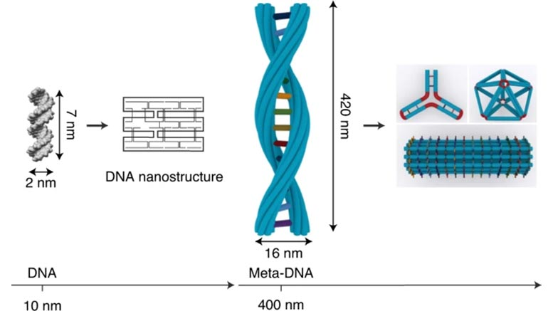 A New Twist on DNA Origami: Meta-DNA Structures Transform the DNA Nanotechnology World