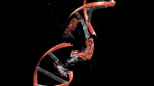 DNA2 Helps Repair Chromosome Rearrangements Linked to Cancer